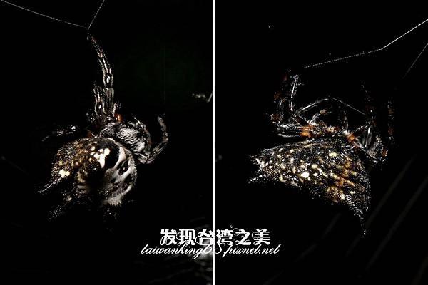 待查蜘蛛_202003189137
