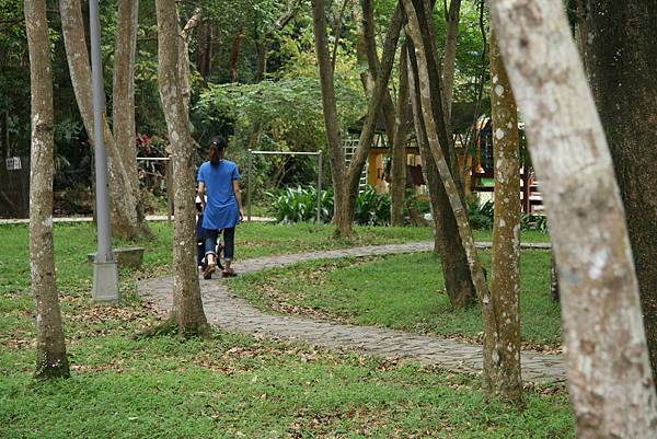 森林中騎pushbike