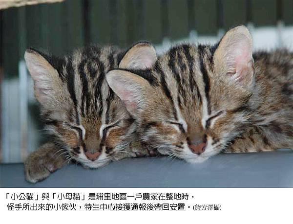 石虎雙胞胎