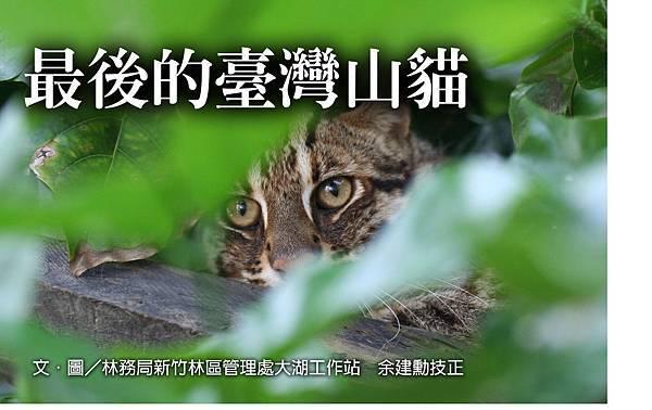 最後的臺灣山貓