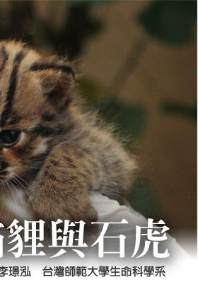 貓貍與石虎2