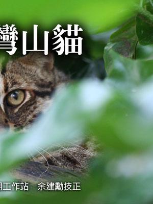 最後的臺灣山貓2