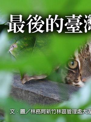 最後的臺灣山貓1