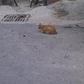20110130小港區偶遇的小貓