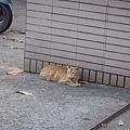 牆角的貓in高雄縣農會