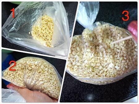 發芽糙米 2