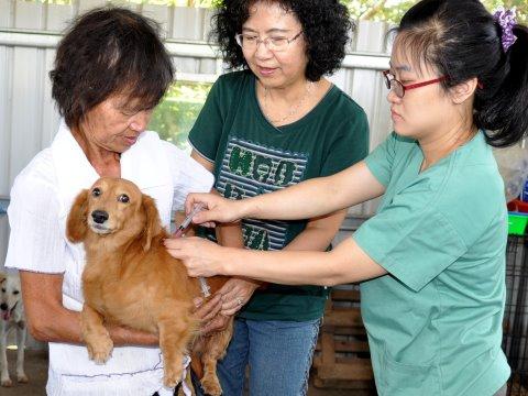 全台150例染病鼬獾 928世界狂犬病日促疫苗宣導