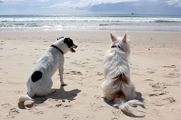 dog-648170_640
