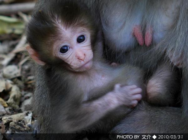 2010嬰猴2.JPG