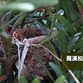 鳥巢.JPG