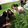 從小矮人的角度看野花,會有不一樣的收穫唷!.JPG