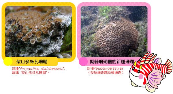 珊瑚.bmp