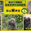 敏敏老師獼猴觀察.bmp