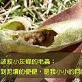 果莢裡的肥料.jpg