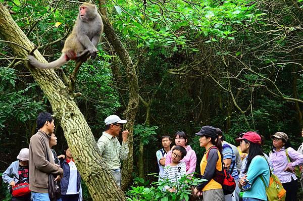 人與猴-相安無事