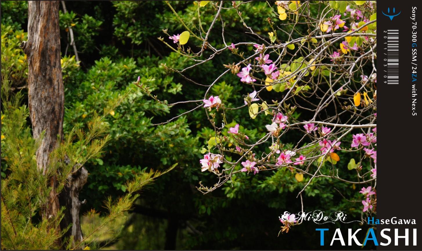 復遊台中公園。蒸籠飲茶-14.jpg
