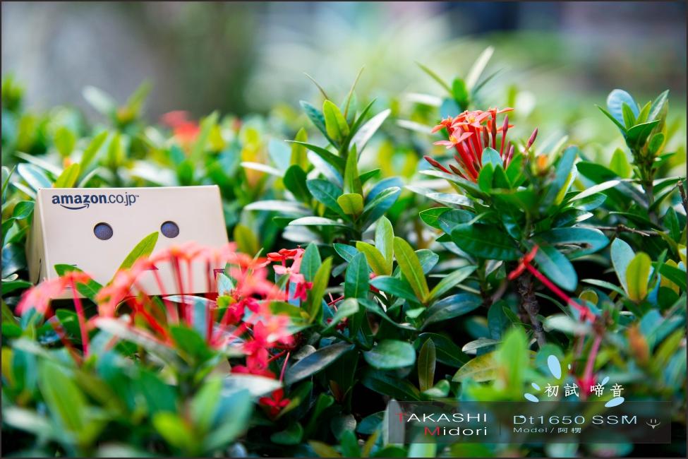 Sony DT1650-初拍-21.jpg