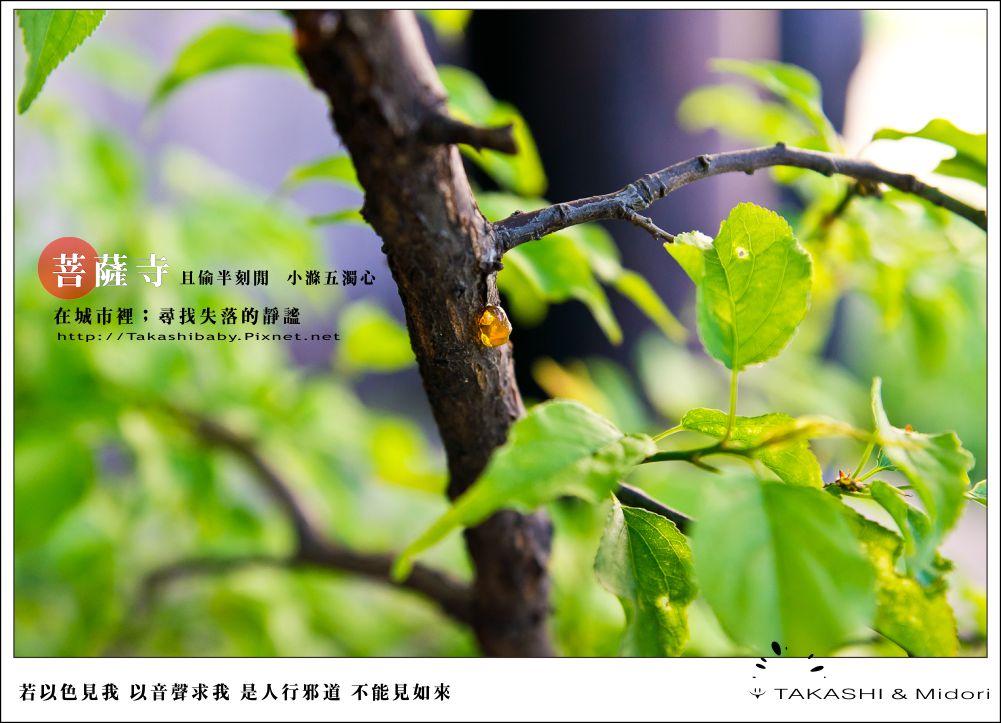 台中。大里菩薩寺-小滌心靈-32
