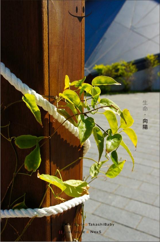 台中-舊酒廠-3-1.jpg