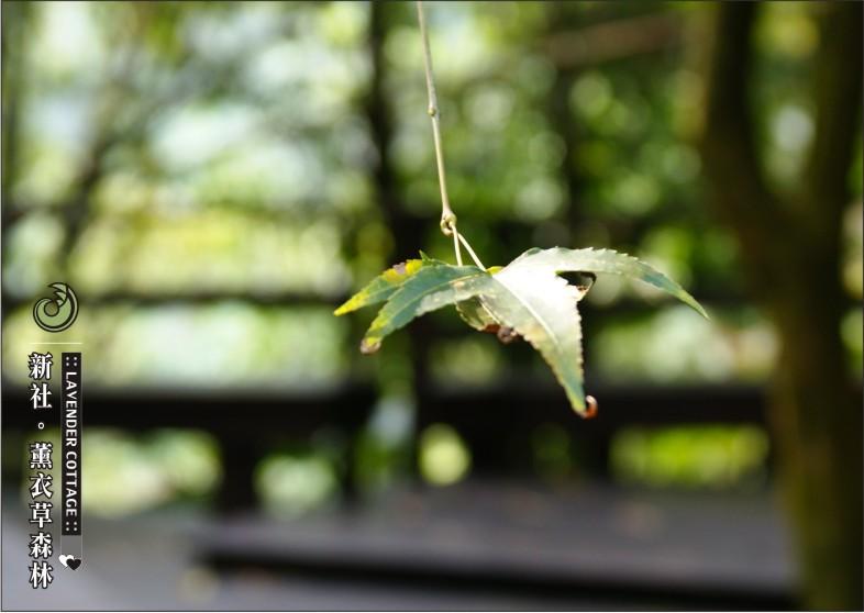 台中-薰衣草森林-71.jpg