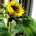 2013-04-24-09-01-55_deco