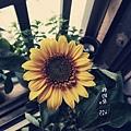 2013-04-25-08-33-03_deco