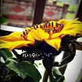 2013-04-25-08-35-47_deco