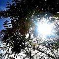 2013-05-31-11-46-00_deco