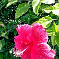 2013-06-28-13-40-33_deco