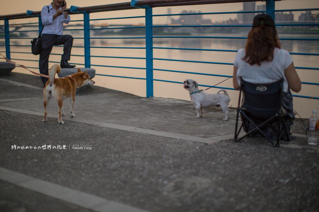 狗 、 男女。