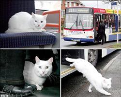 貓搭公車.jpg