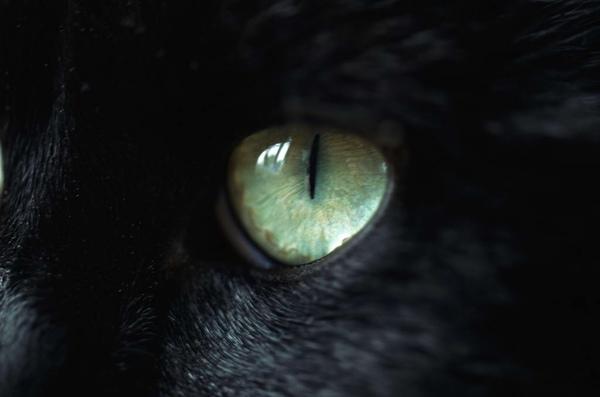 貓眼.jpg