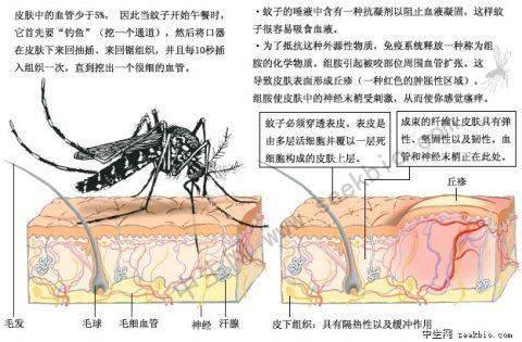 蚊子.jpg