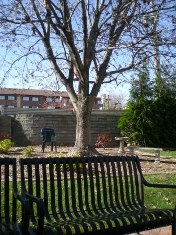 路邊莫名的樹2.jpg