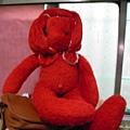 穎的紅兔兔