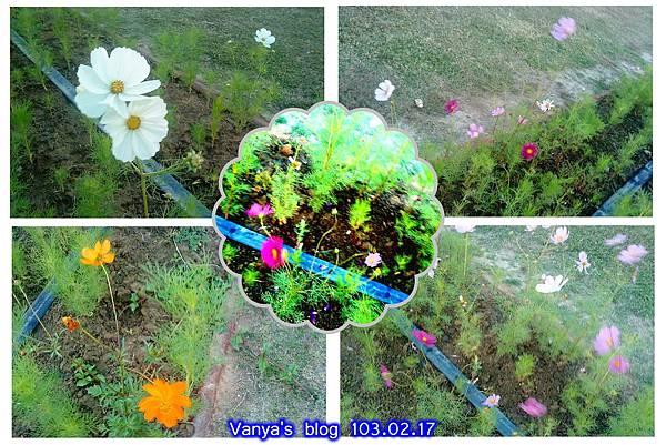 駁二特區種植的小花