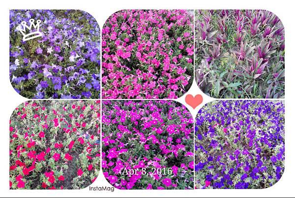 駁二舊鐵道的花卉們