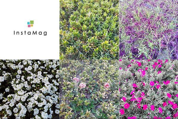 駁二舊鐵道的花卉~午後五點多的模樣