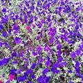 駁二舊鐵道的花卉-紫