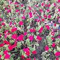 駁二舊鐵道的花卉-紅