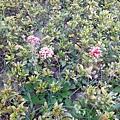 駁二舊鐵道的花卉3