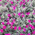 駁二舊鐵道的花卉5