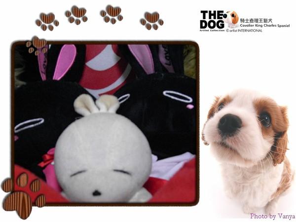 黑、白、黑兔三人組
