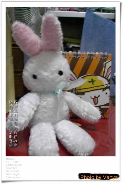 白小兔報到