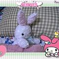 白小兔休息了