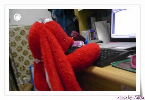 紅兔兔認真辦公中
