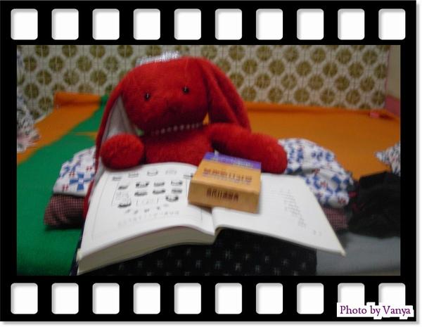 紅兔兔勉強中
