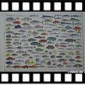 澳洲的魚類圖,穎爸的收藏物
