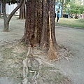 高捷中央公園,小松鼠