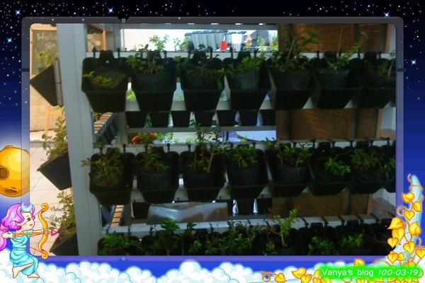 咖啡林咖啡-店外種植的裝飾盆栽